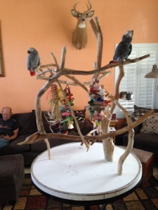New perch Gobby n Lola